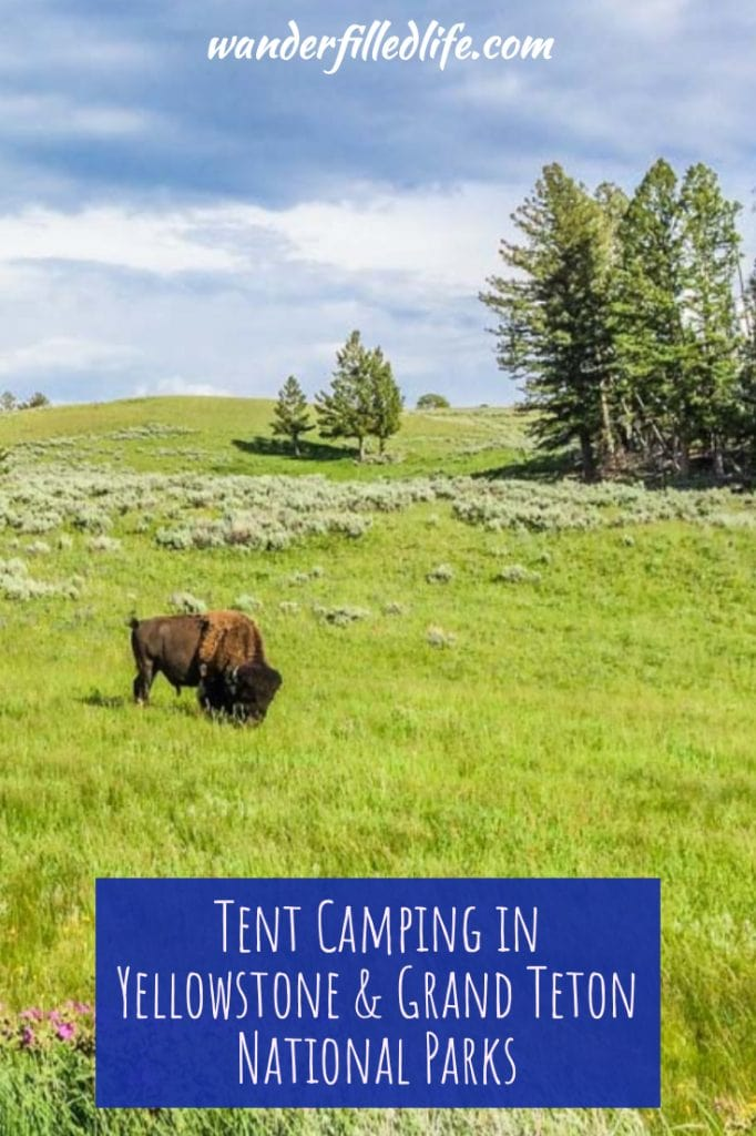 We spent several nights tent camping in Yellowstone and Grand Teton national parks. The parks offer so much in terms of wildlife and scenery to enjoy.