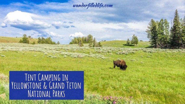 Tent Camping Yellowstone