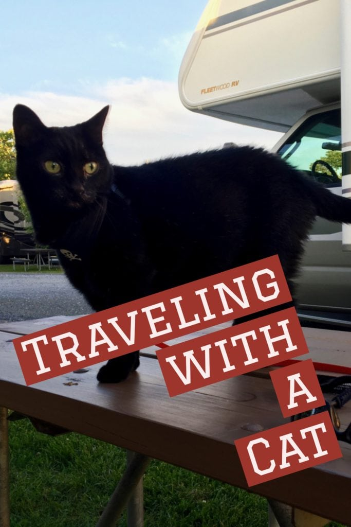 Traveling with a cat on the road in a camper can be a challenge, but the rewards of having your pet with you outweighs the difficulties.