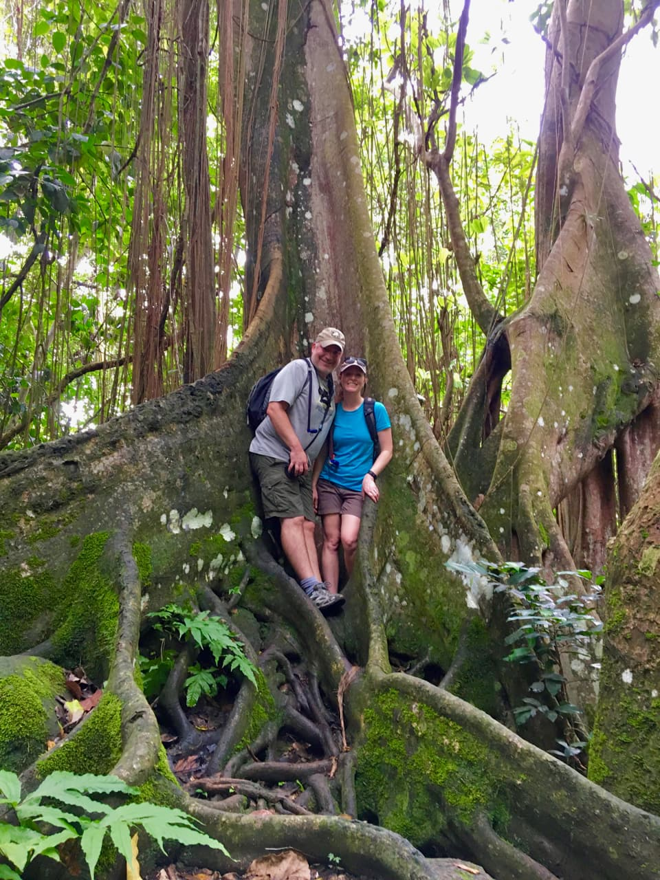 Tucked in a Tree - we love hiking the rainforest in Saint Kitts.