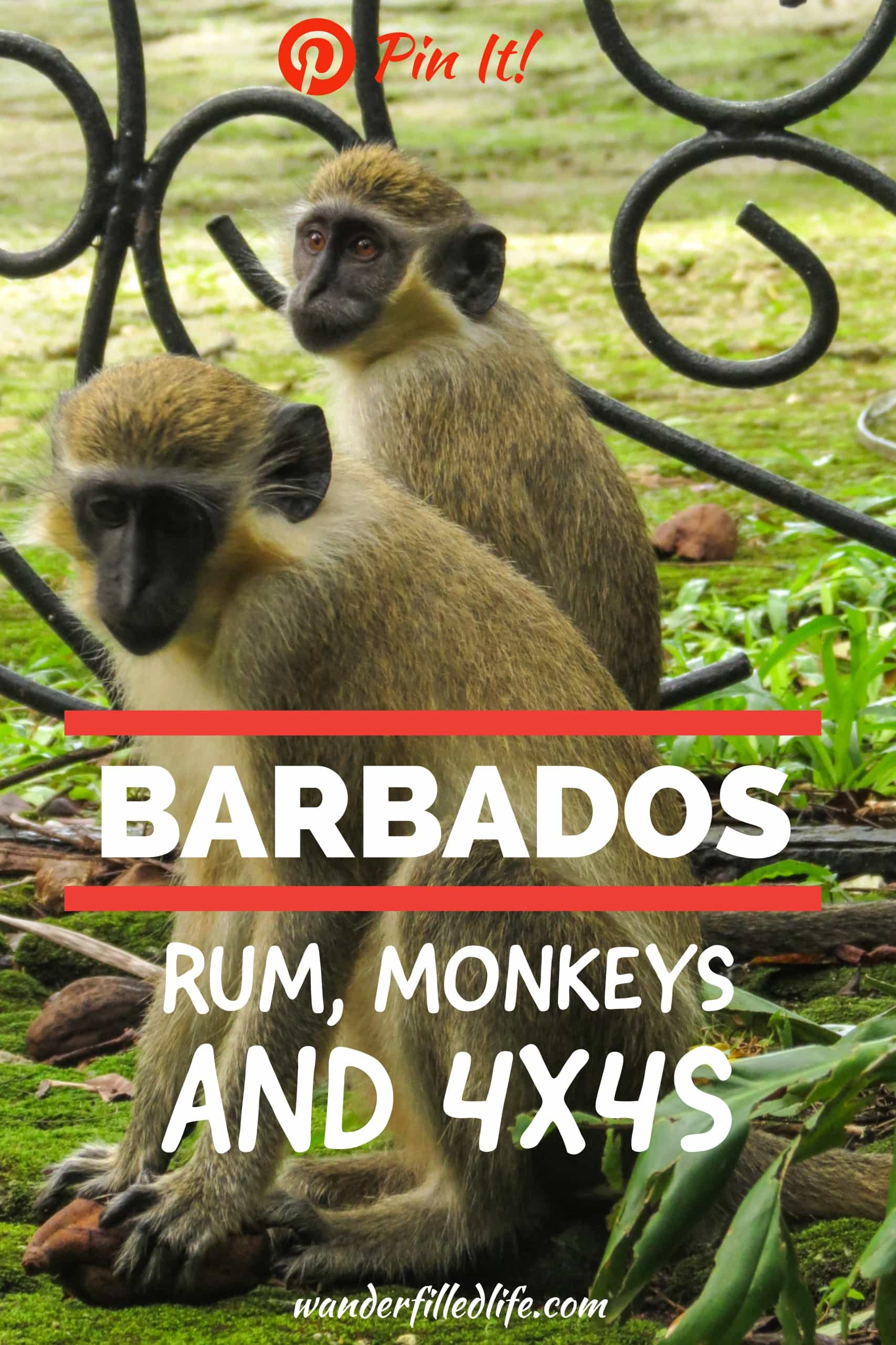 Port report from Bridgetown, Barbados, including the Mount Gay Rum Tasting Room, green monkeys at the wildlife preserve and the rugged Atlantic Coast.