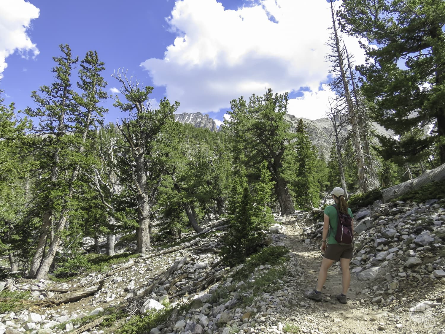 Take time to enjoy the views in Great Basin NP.