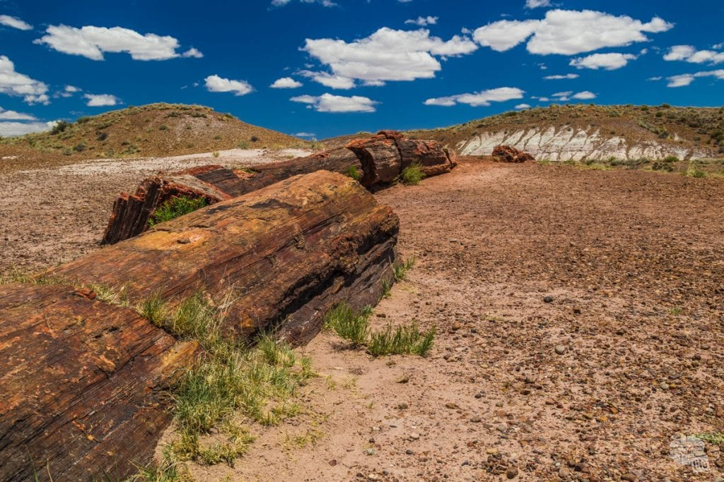 As you get to the south end of Petrified Forest National Park, you will find lots of petrified wood scattered about.
