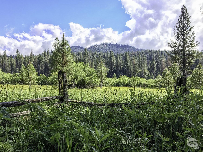 Wawana Meadow in Yosemite National Park