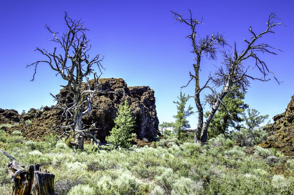 Devil's Orchard in Craters of the Moon National Monument