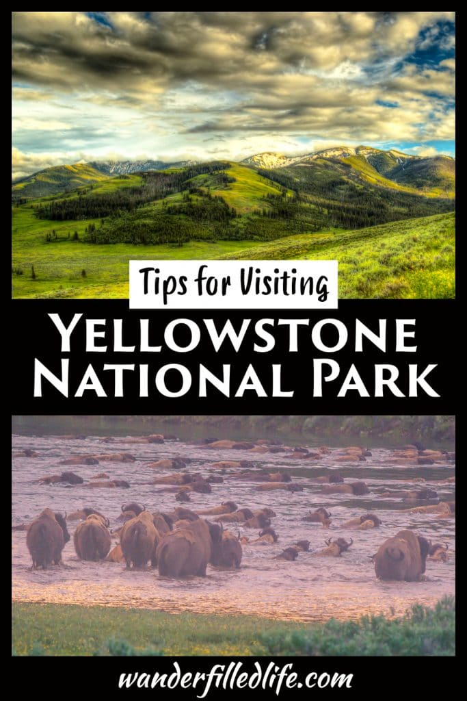 Tips for a successful summer visit to Yellowstone National Park, including how long to stay, where to find wildlife and where to eat.