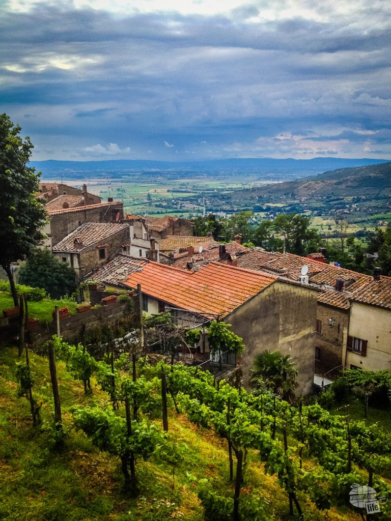 Grape vines line the hill sides of Cortona.