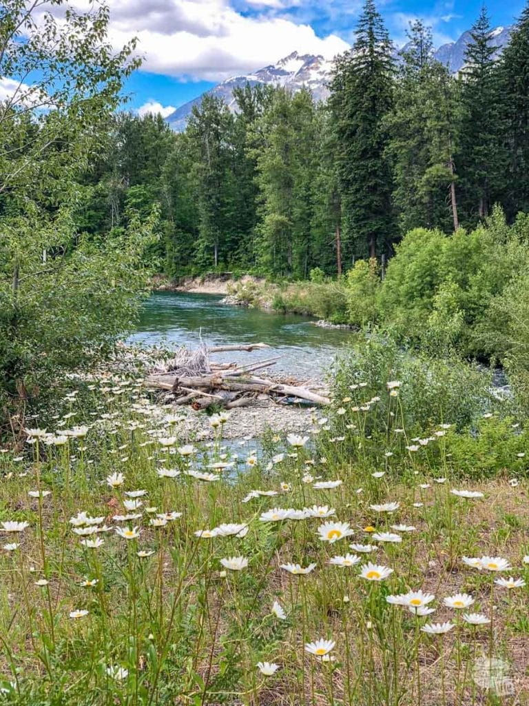 Flowers along the Stehekin River