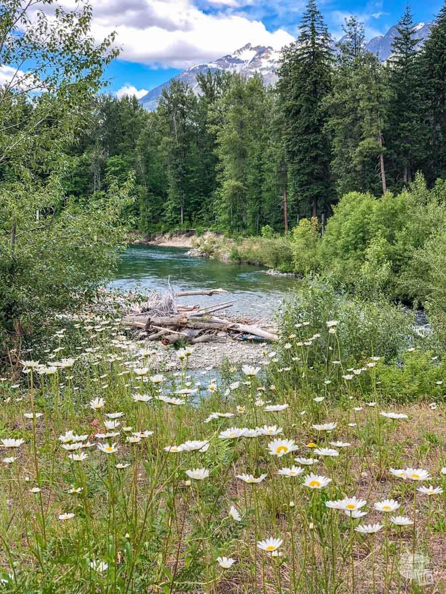 Flowers along the Stehekin River