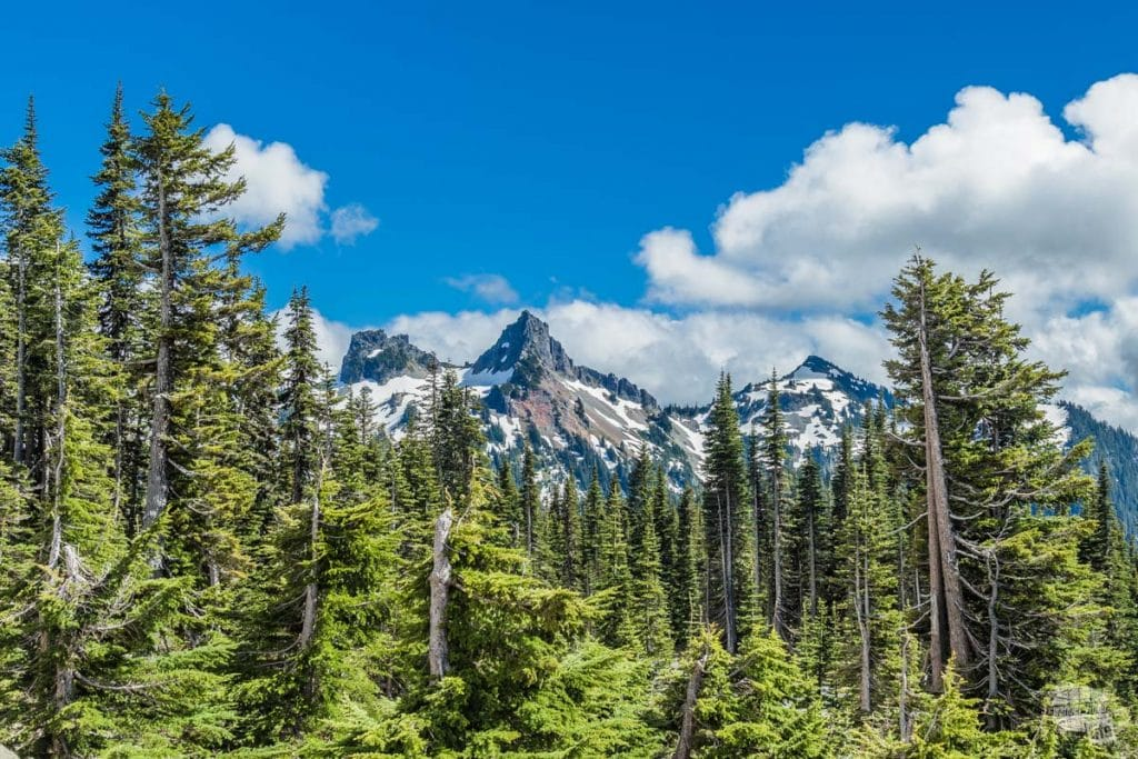 There's more to Mt. Rainier National Park than just the one mountain.