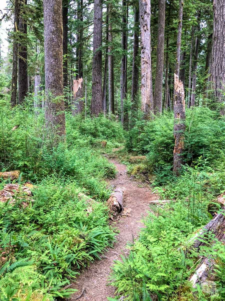 Irely Lake Trail