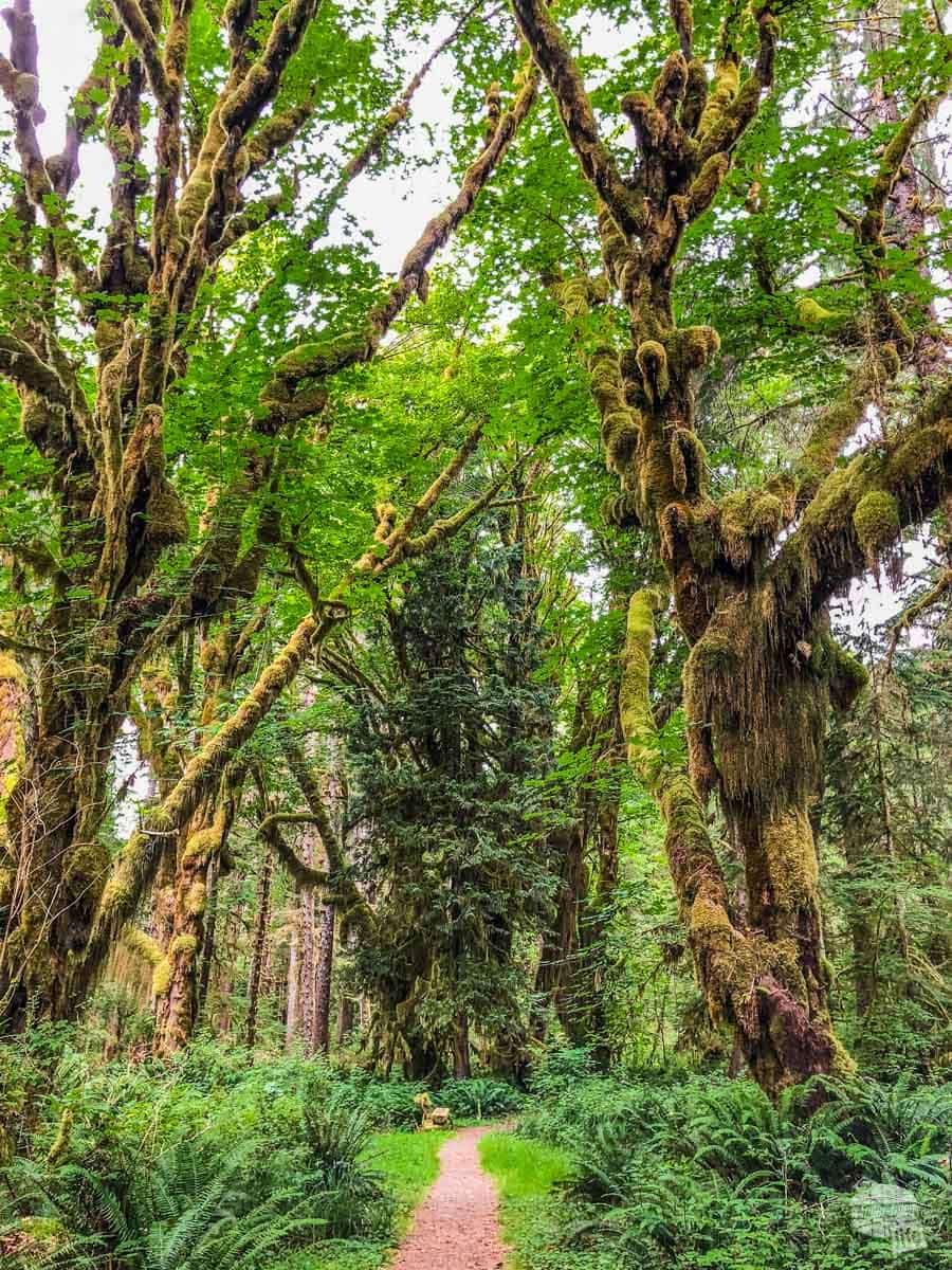 The Kestner Homestead Trail forms a loop back to the visitor center through an amazing grove of trees.