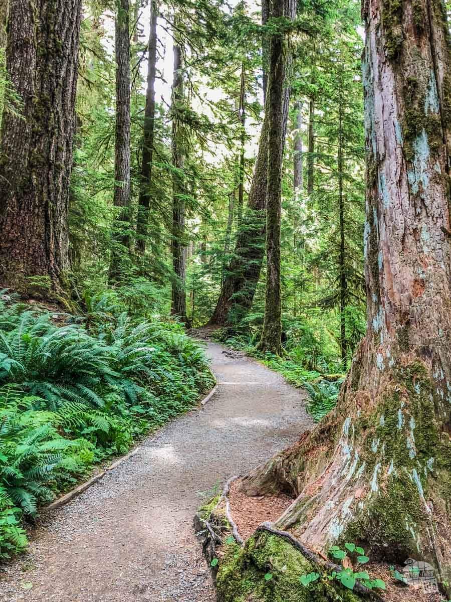 Marymere Falls Trail
