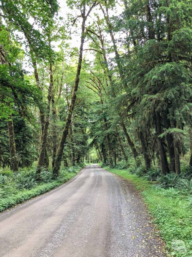 South Shore Road in the Quinault Rainforest