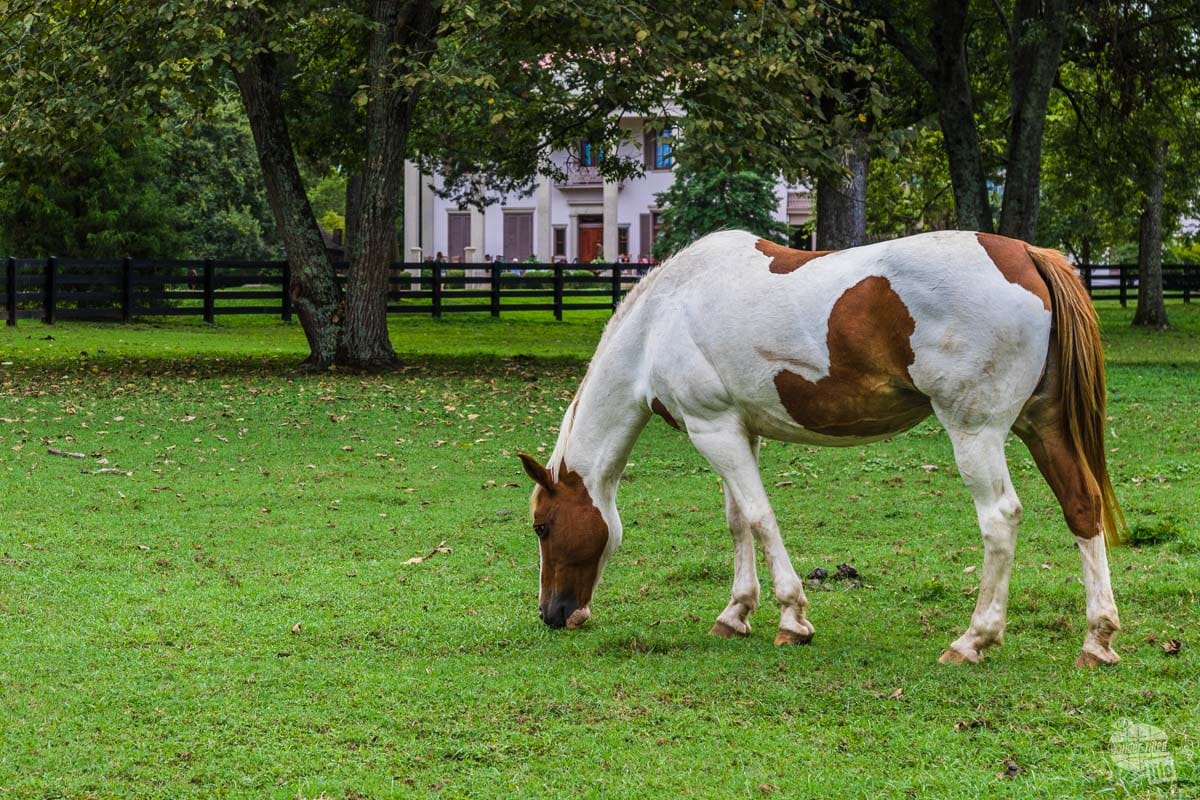 Belle Meade made its money on horse breeding.