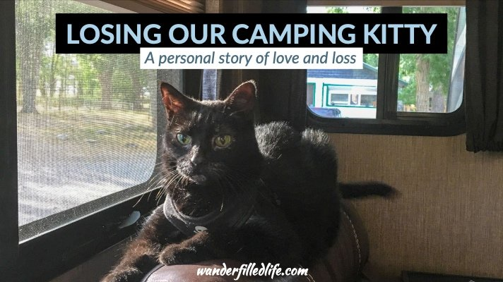 Alee, Our Camping Kitty