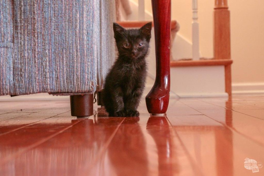 Alee as a kitten.
