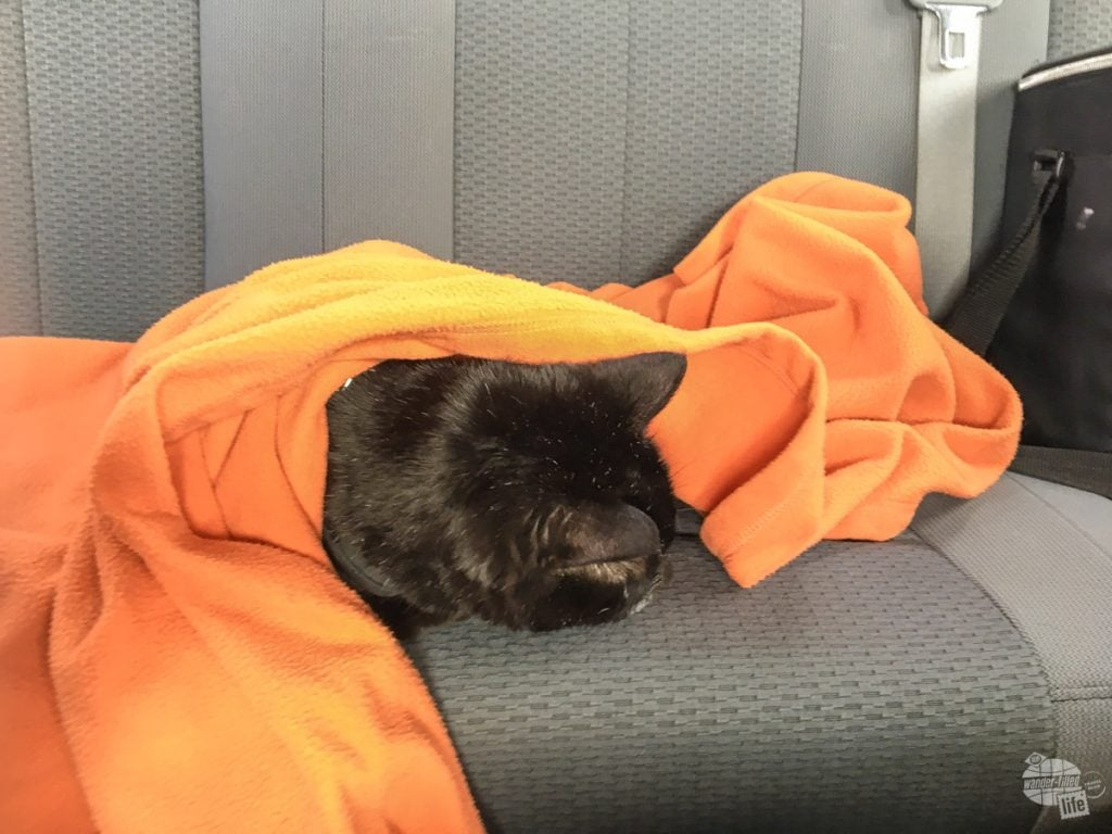 Alee liked to sleep under her favorite blanket when we drove.