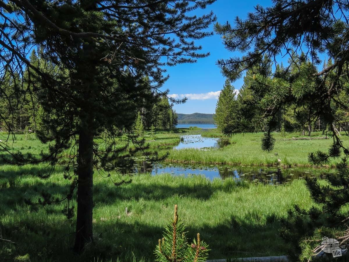 Shoshone Lake peeking through the trees.