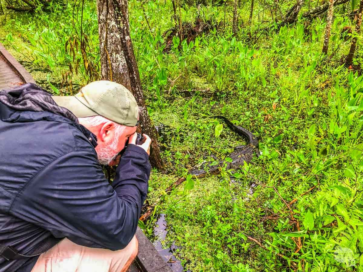 Grant taking pictures of a gator.