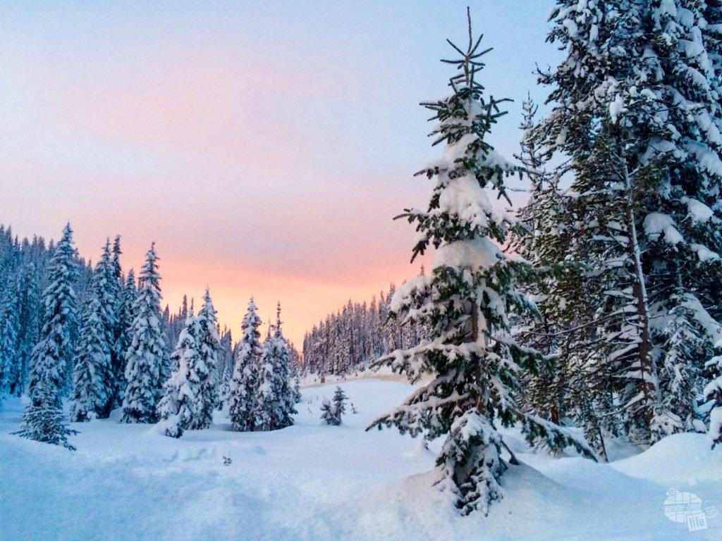 Deep snow on the way to Lolo Pass on the Montana/Idaho border