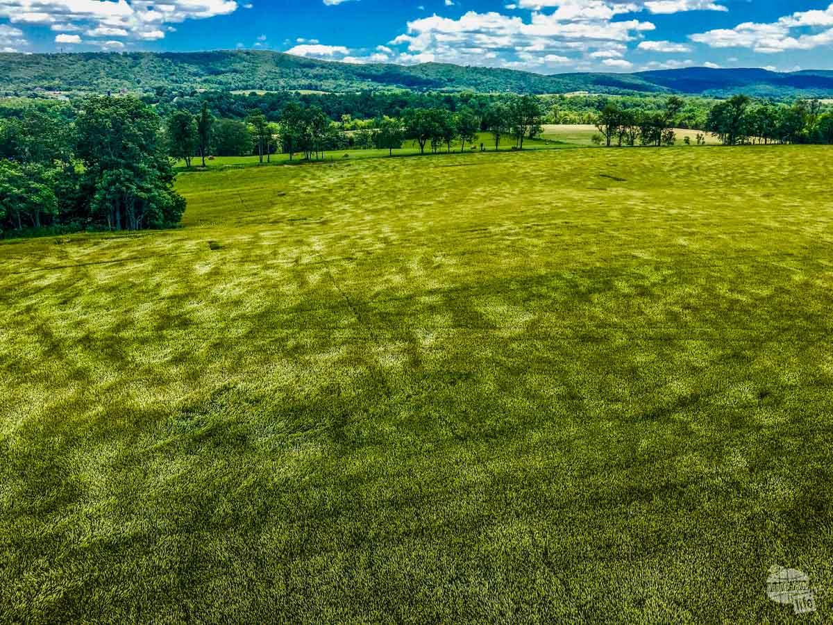 Fields of grain undulating in the wind at Antietam.