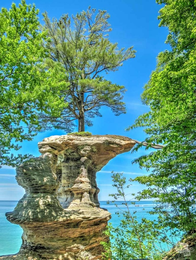 One root of the tree on Chapel Rock stretches to the mainland.