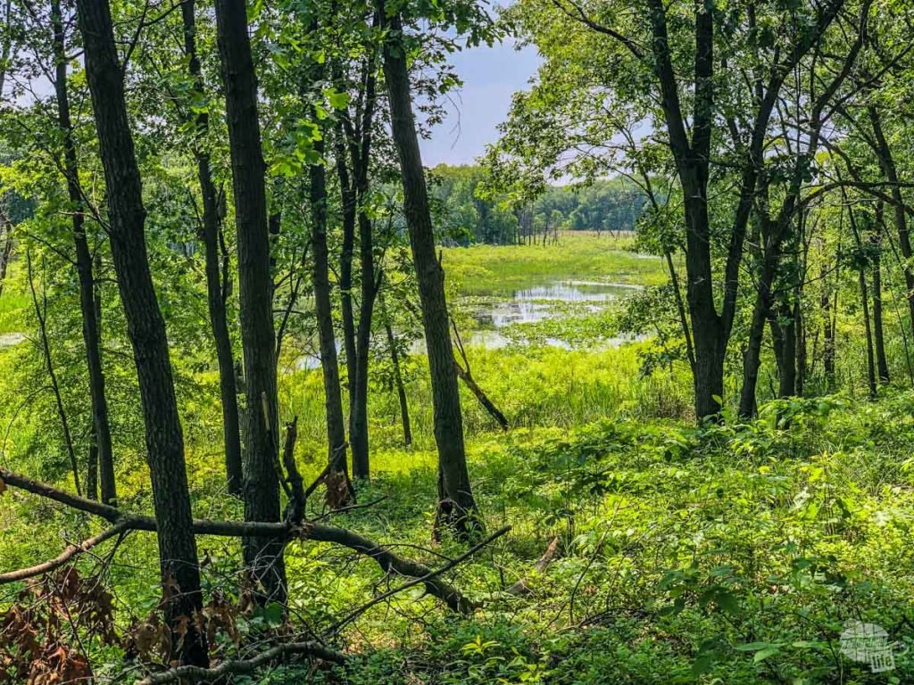 Cowles Bog at Indiana Dunes NP