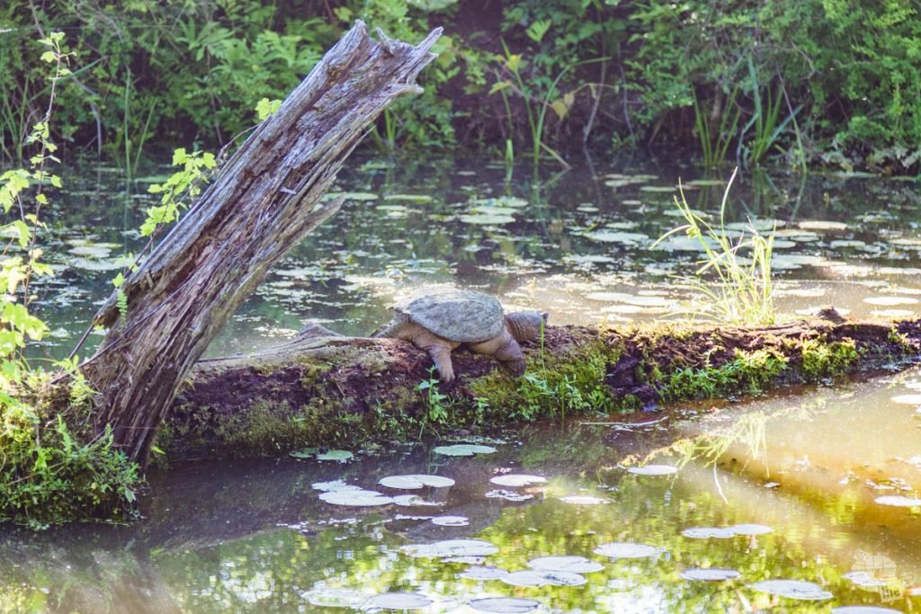 Beaver Marsh is a great thing to see at Cuyahoga Valley National Park.
