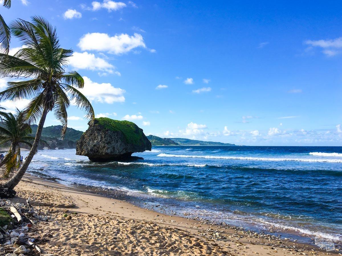Palm trees and rocks line the Atlantic coast of Barbados.