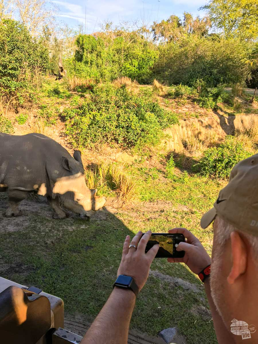 Grant taking a shot of a rhino on the safari ride. While it is a zoo, the animals really can get that close.
