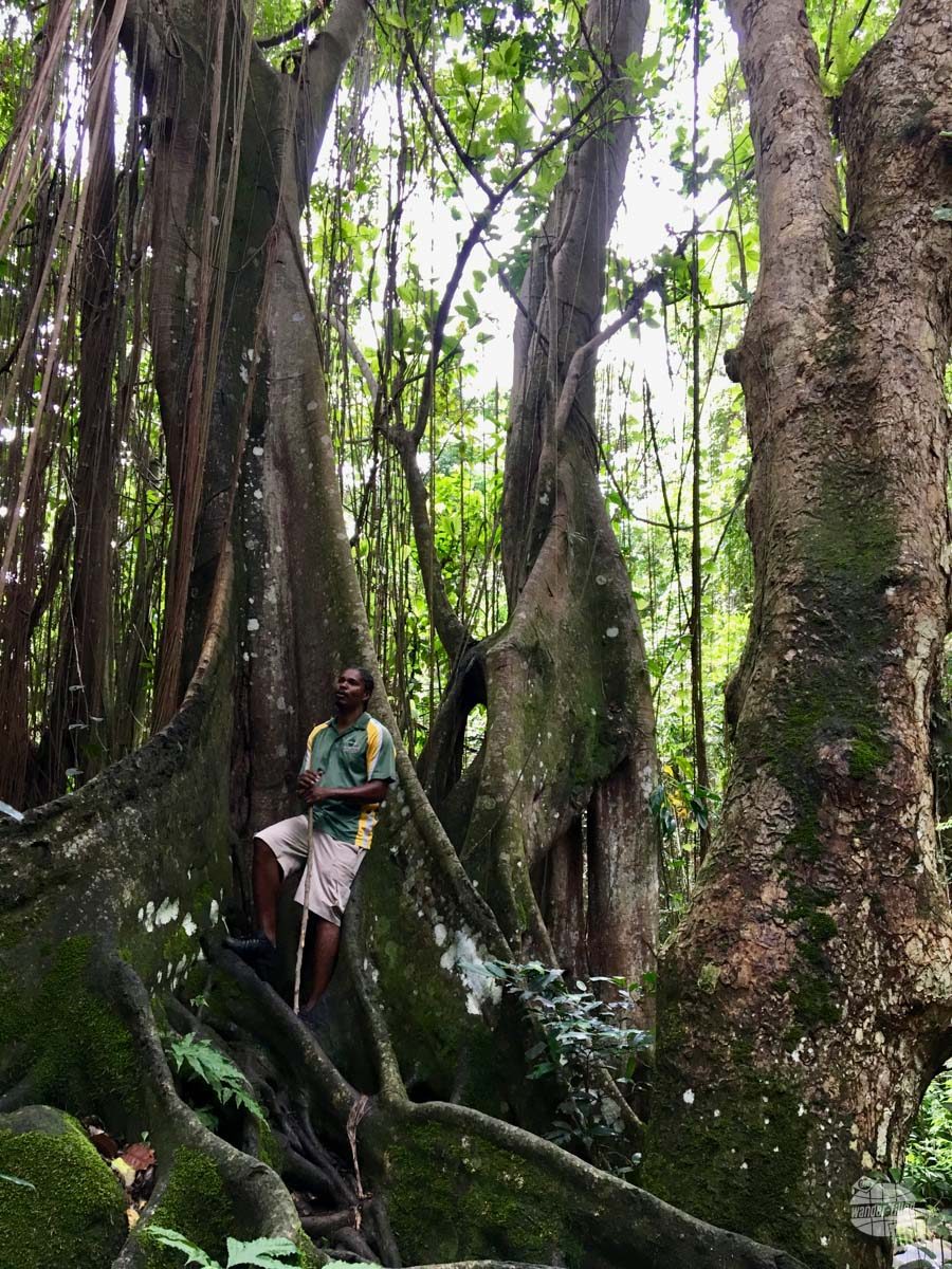 Our guide on the rainforest hike on Saint Kitts.