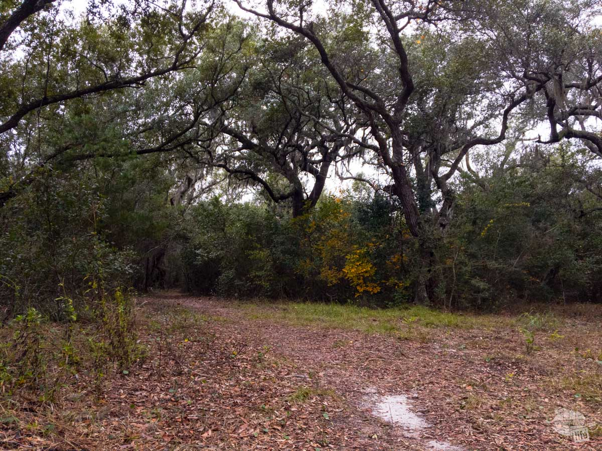 The Naval Live Oaks unit of Gulf Island National Seashore preserves the first tree farm in the US, designed to provide the Navy with extra hard wood for its ships.