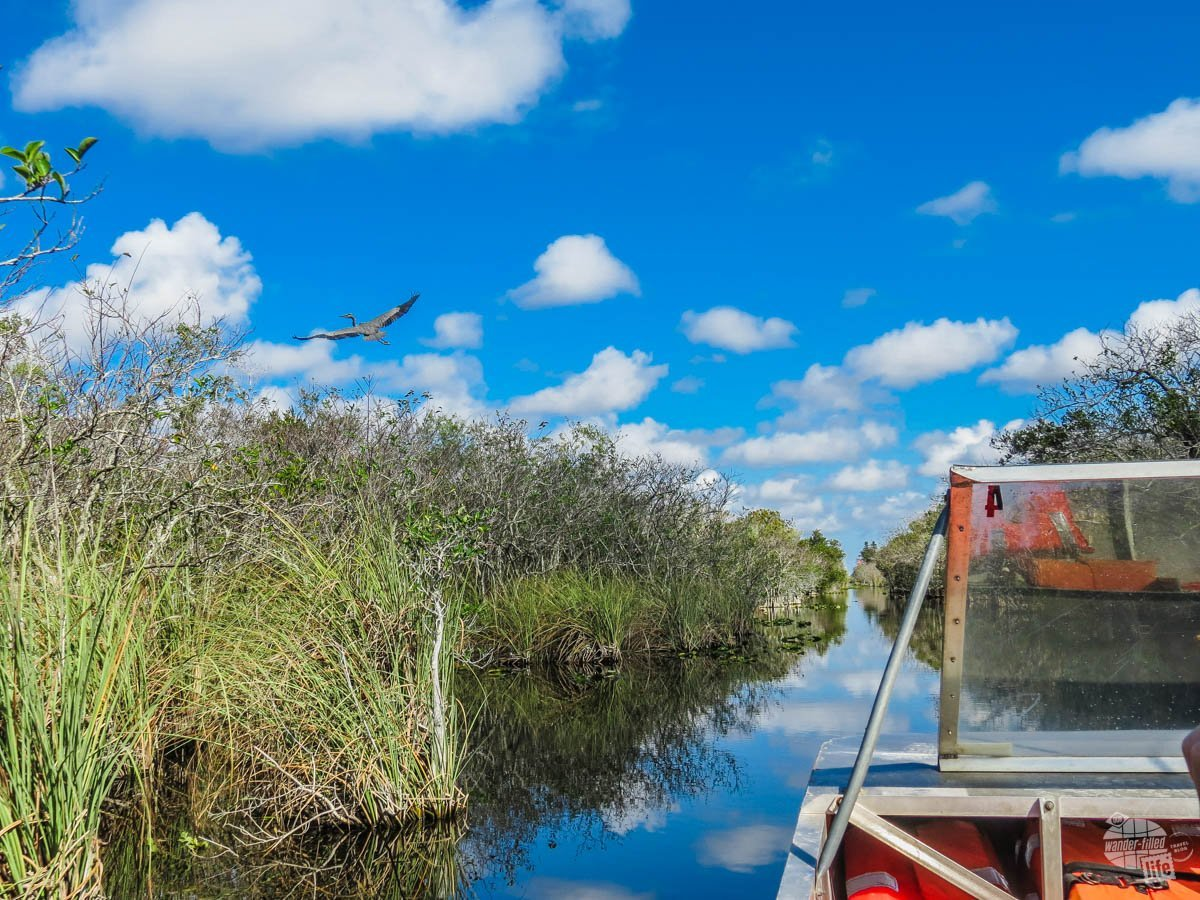If you want to truly experience the Everglades, you have to get out into the swamp and an airboat tour is one of the best ways to accomplish just that! It's seriously one of the coolest things to do in the Everglades.