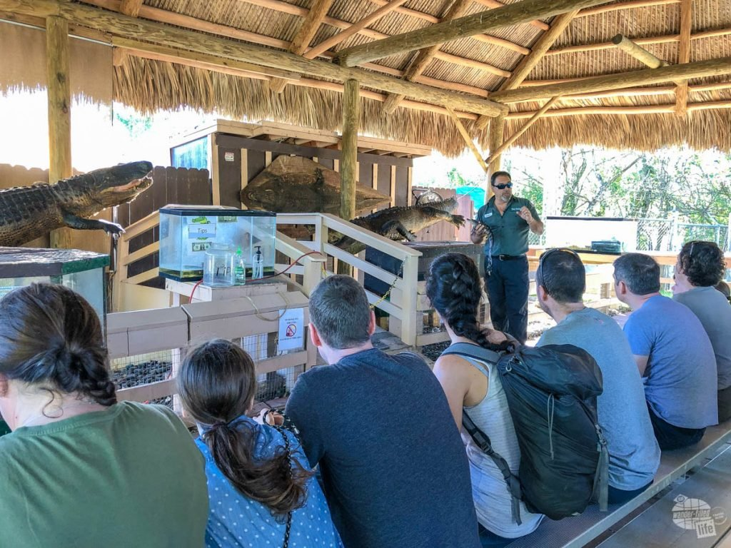 One of the guides at Coopertown Airboat giving a talk about gators before we when our airboat ride.