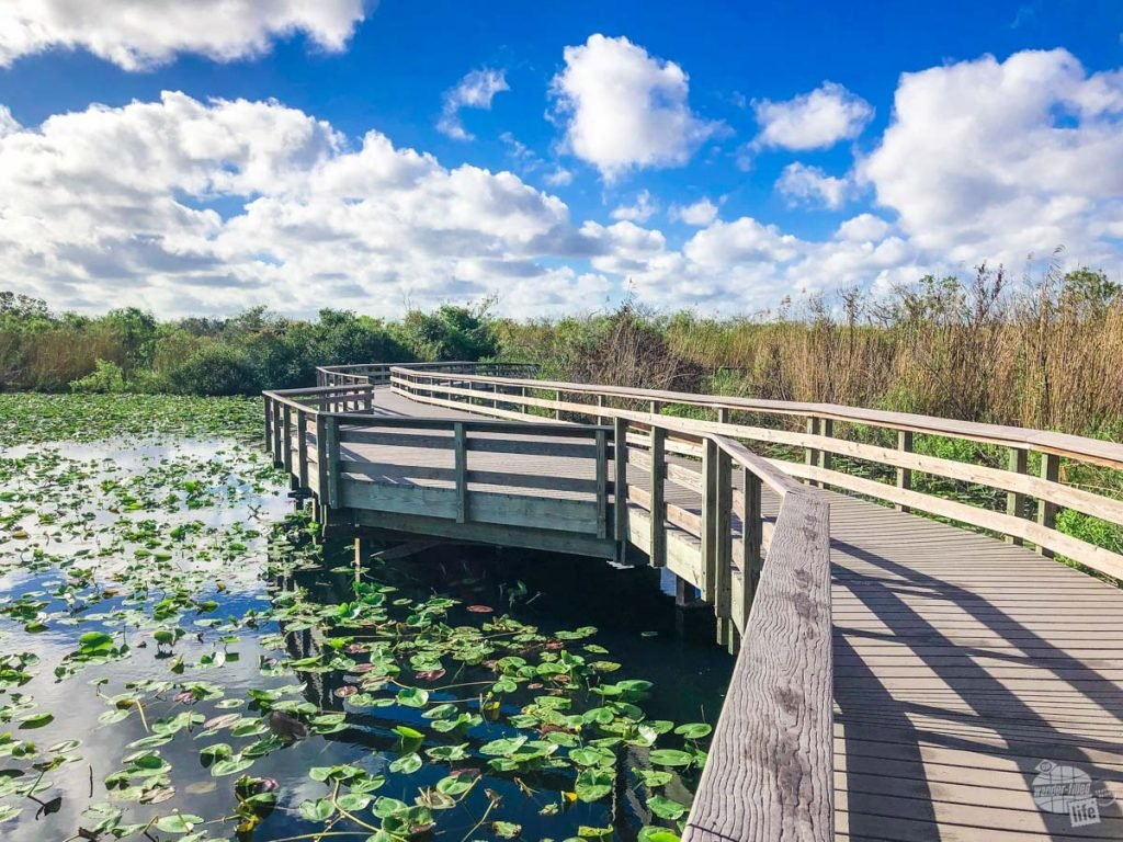 The Anhinga Trail is a must-do at Everglades National Park.