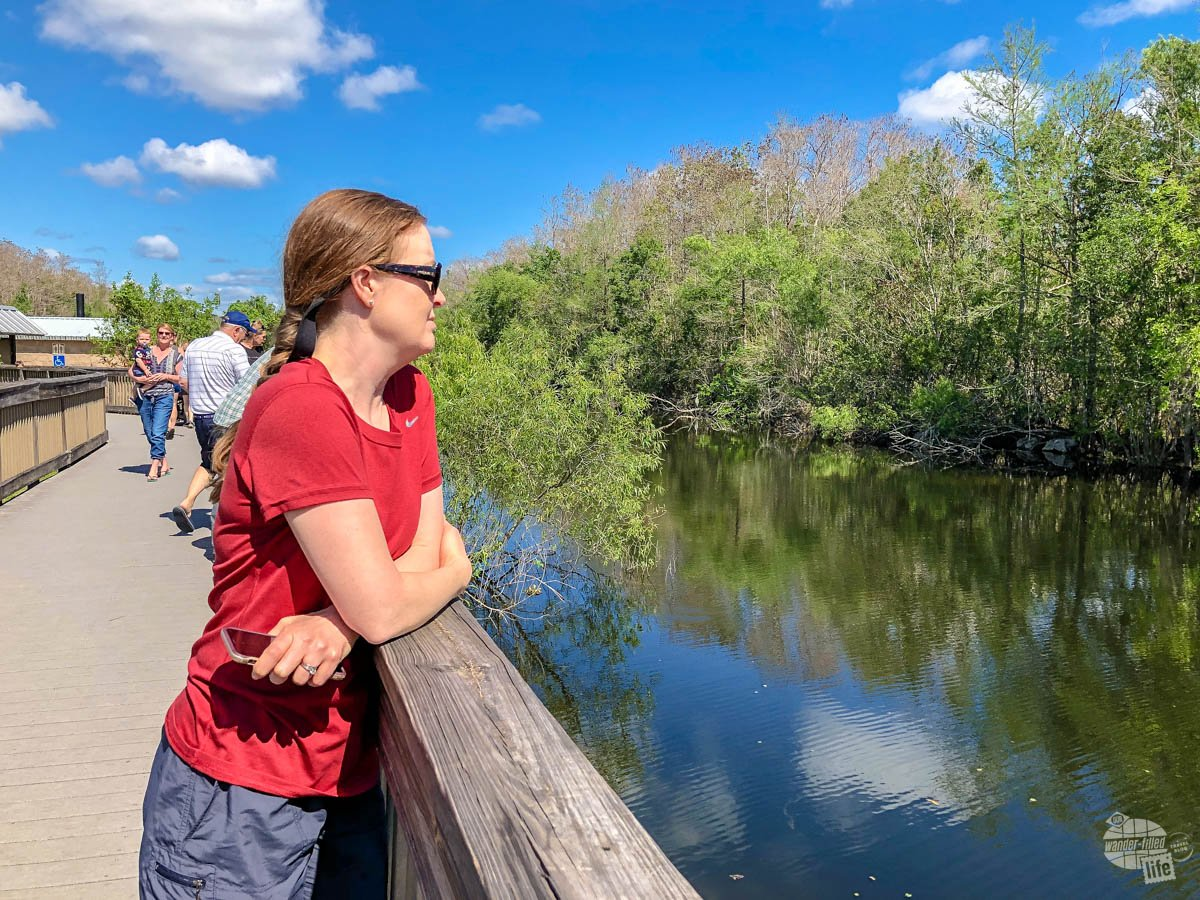 Bonnie checking out the wildlife at the HP Williiams Roadside Park in Big Cypress National Preserve.