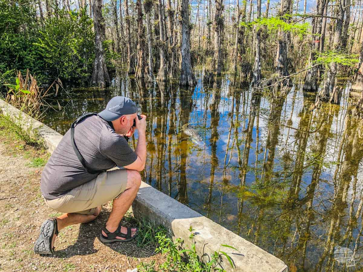 Grant taking picutres of a gator in Big Cypress National Preserve.