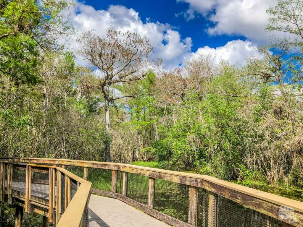 The boardwalk at Kirby Storter Roadside Park in Big Cypress National Preserve.