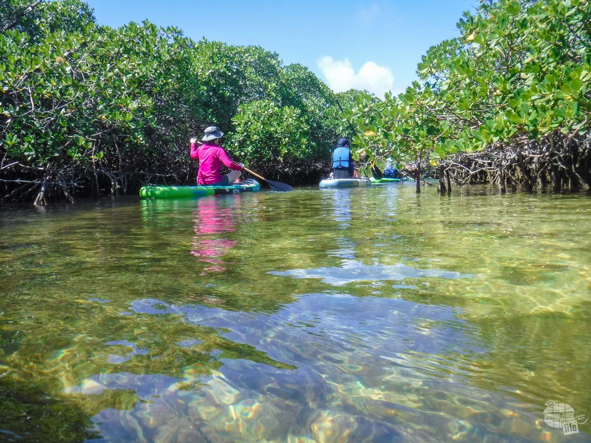 Paddleboarding through the clear waters of Biscayne National Park.
