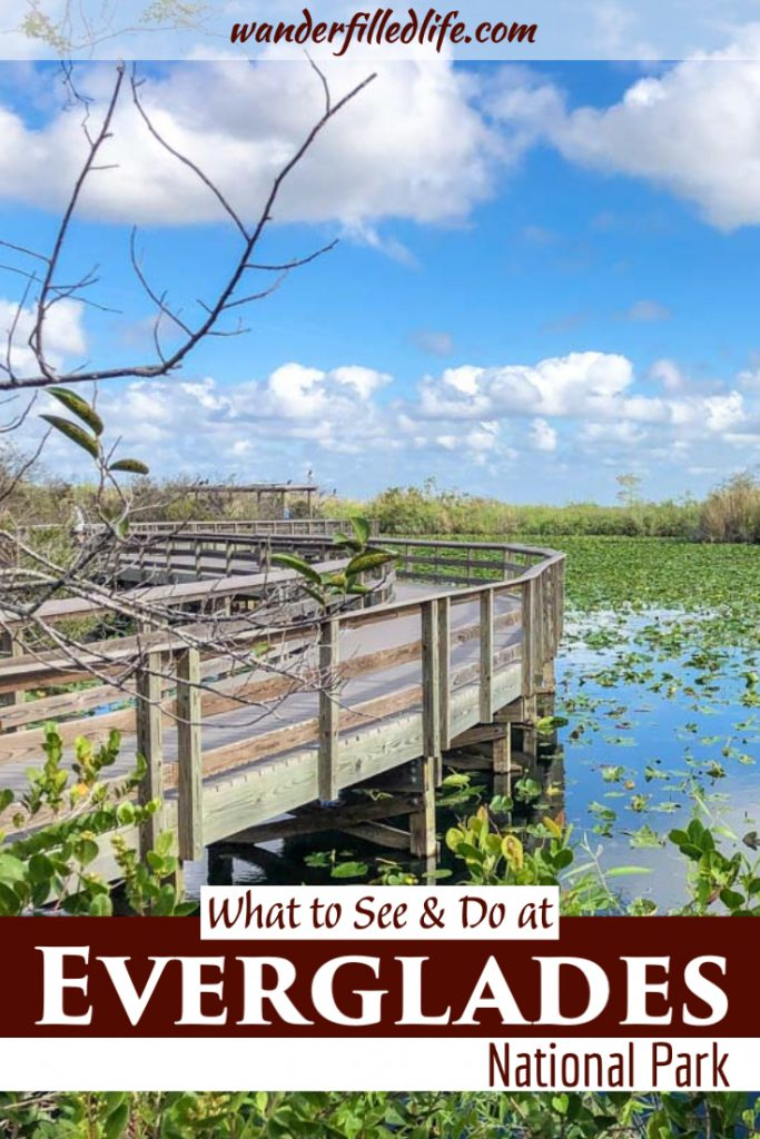 Our complete guide of things to do in the Everglades. Whether you have one day or three, you can stay busy in the Everglades and Big Cypress NP.