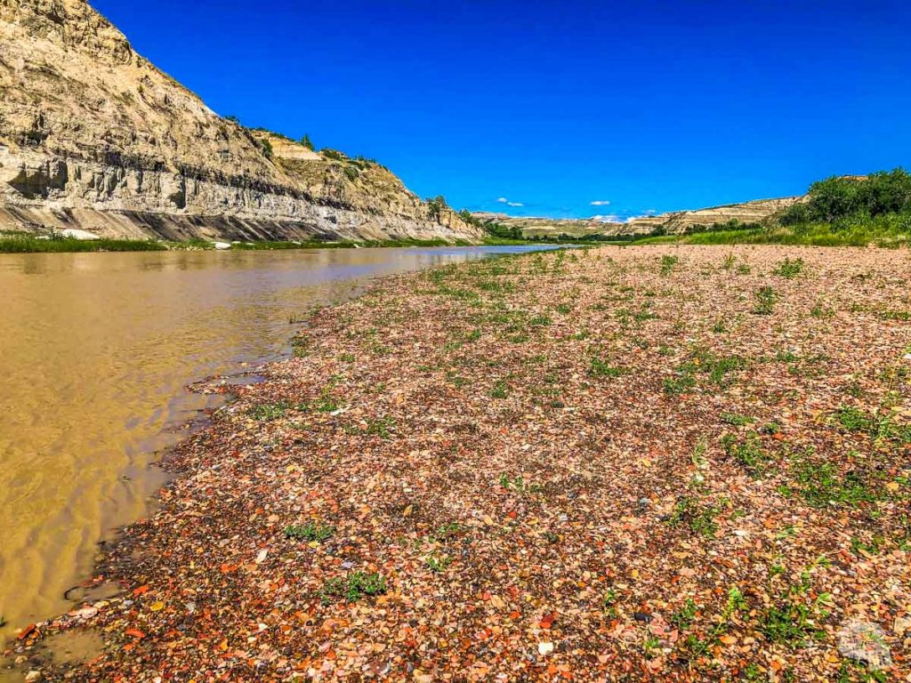 Banks of the Little Missouri River, taken near Peaceful Valley Ranch.