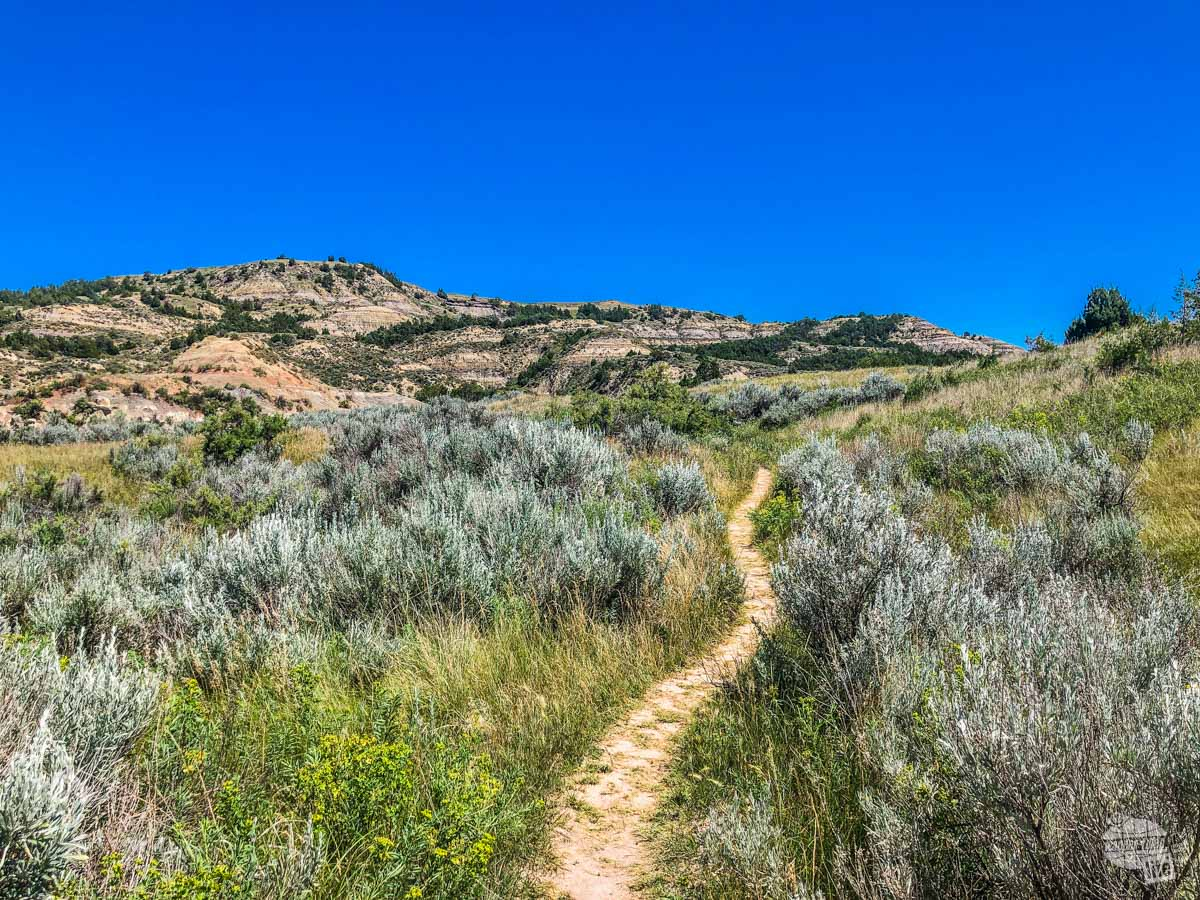 A visit to Theodore Roosevelt NP is one of the top things to do in Medora.