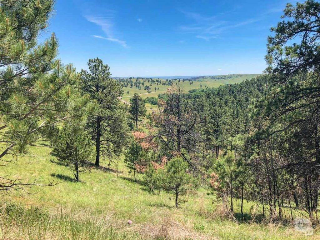 Driving the wildlife loop is a must at Custer State Park.