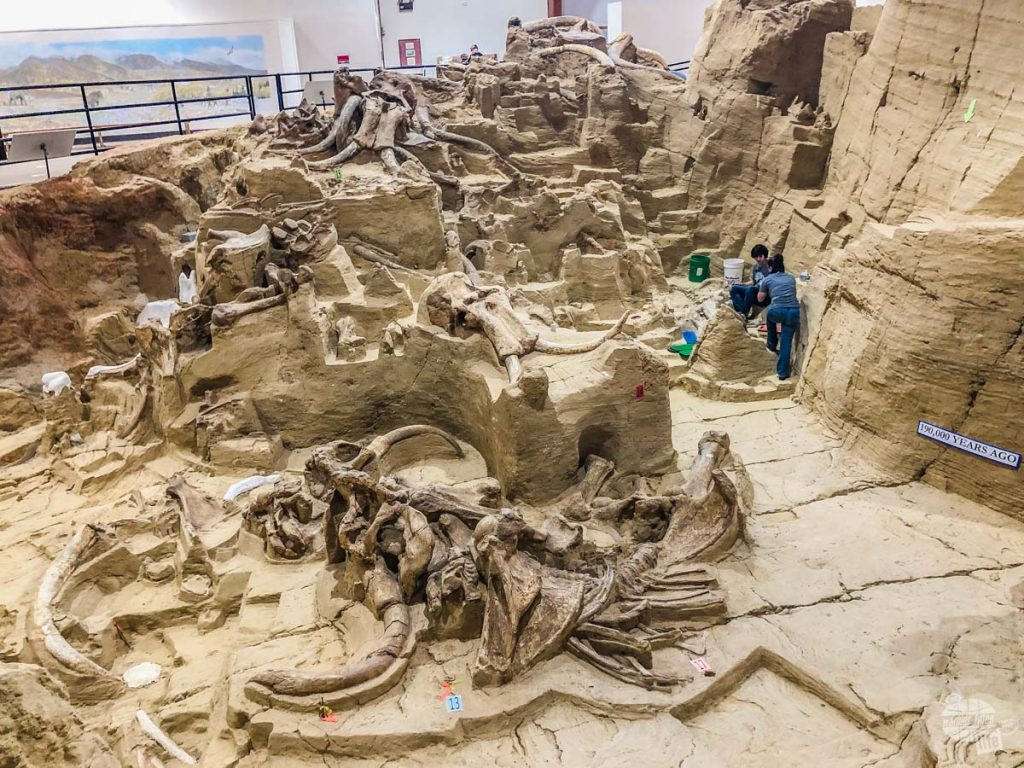 The Mammoth Site is just one of many things to do near Custer State Park.