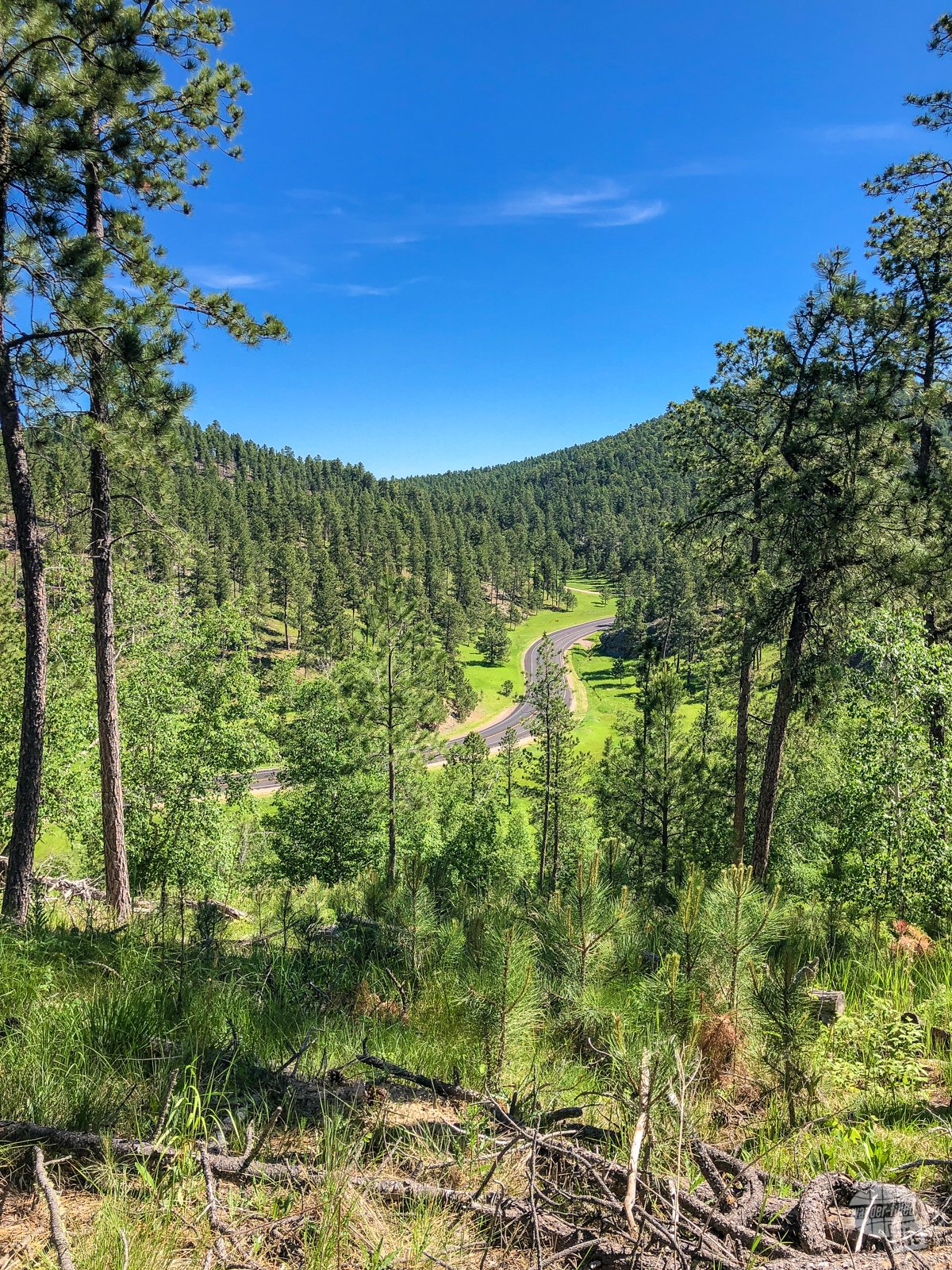 The road snaking through the north end of Custer State Park.
