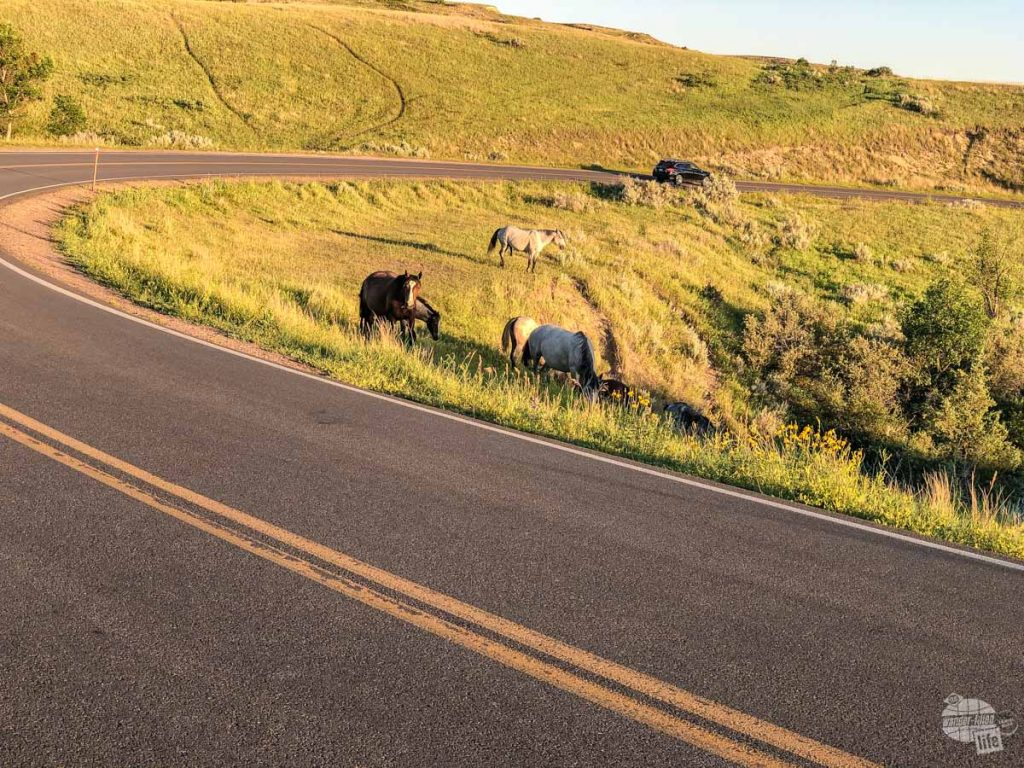 Wild horses and other wildlife are a top reason to visit Medora and Theodore Roosevelt National Park.