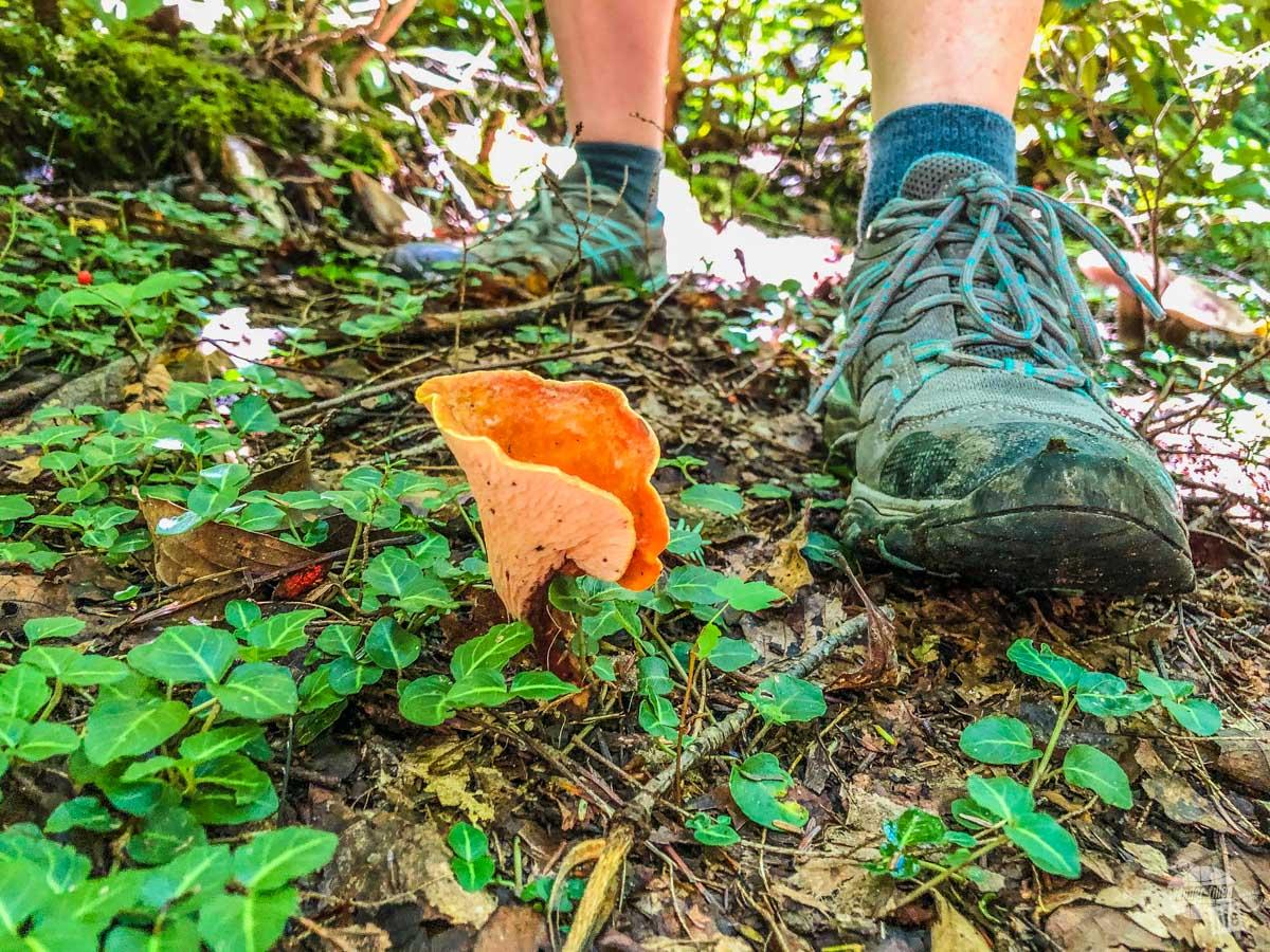 Mushroom along the trail.