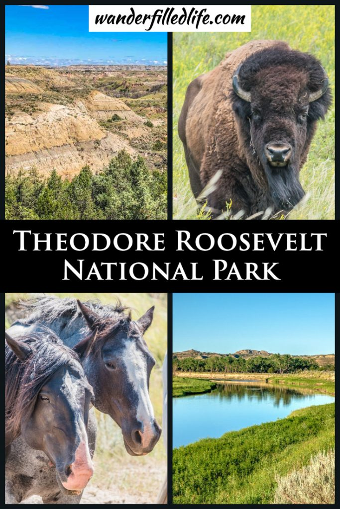All it takes is visiting Theodore Roosevelt National Park once to see why the former president fell in love with this rugged landscape.