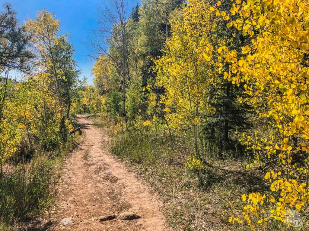 The early fall colors really are spectacular along the Piedra River Trail.